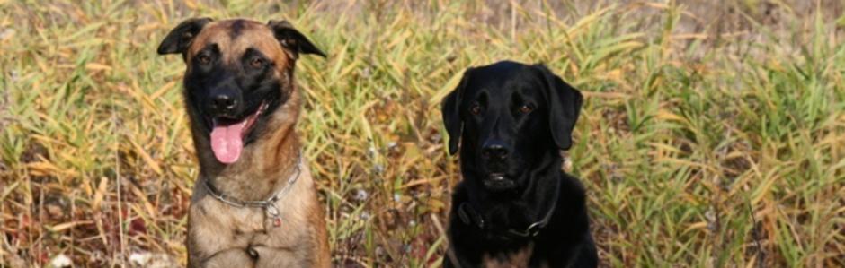 Hundetrainer Hundeschule Bamberg
